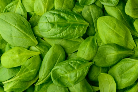 background with fresh organic basil leaves or spinach
