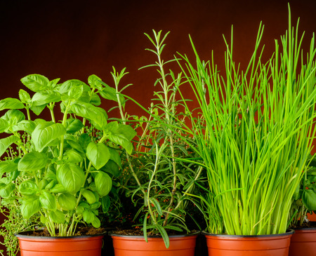 pot: various fresh green organic herbs in pots background Stock Photo