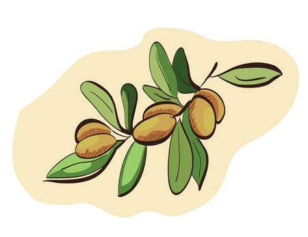 Argan fruits on branch. Clip-art, Illustration. Vector