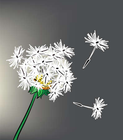 overblown: Illustration of beautiful dandelion on gray background. Clip-art, Illustration. Illustration