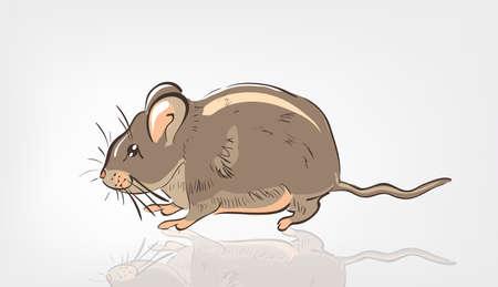 mustached: Cartoon Rat . Clip-art, Illustration.