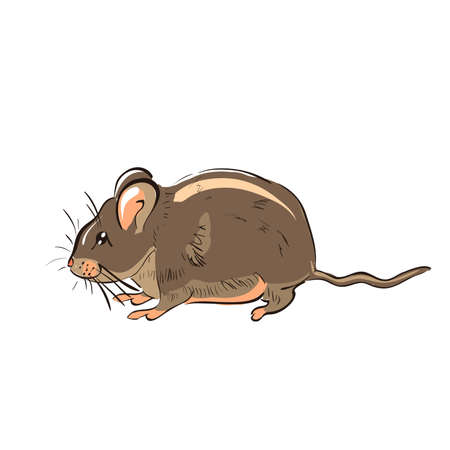 mustached: Illustration of hand drawn funny rat