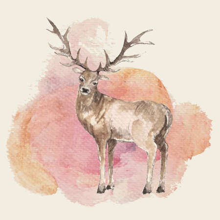 Illustration of hand drawn deer with watercolor background Illustration