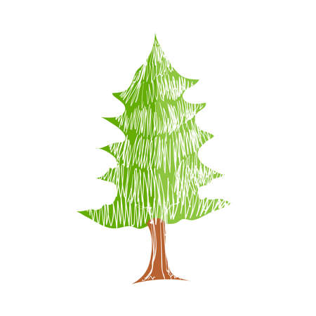 pine tree isolated: Illustration of hand drawn pine tree isolated on white background