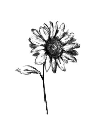 flor aislada: Ilustraci�n de l�piz dibujado flor aislada sobre fondo blanco