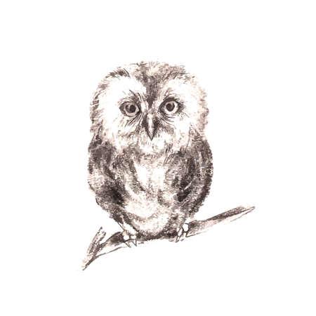 Ilustración de la mano del búho dibujado aislado en fondo blanco Foto de archivo - 38607674