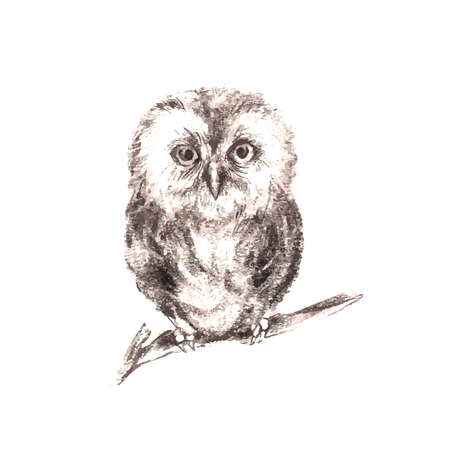 Illustration of hand drawn owl isolated on white background