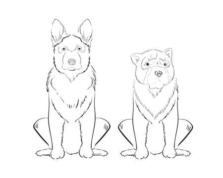 pyrenean mountain dog: Illustration of hand drawn dogs isolated on white background