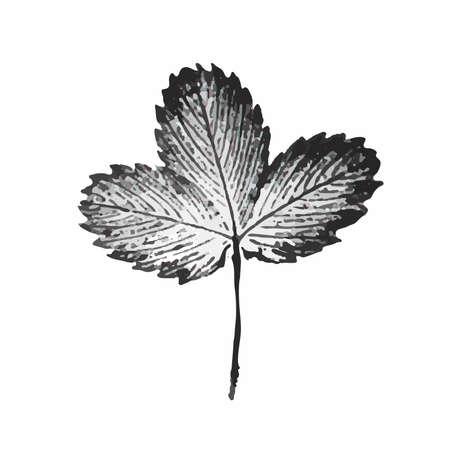 Illustration of engraved strawberry leaf isoalated on white background Illustration