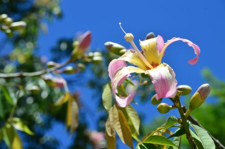 A beautiful flower in the light of noon in the sky for commercial purposes