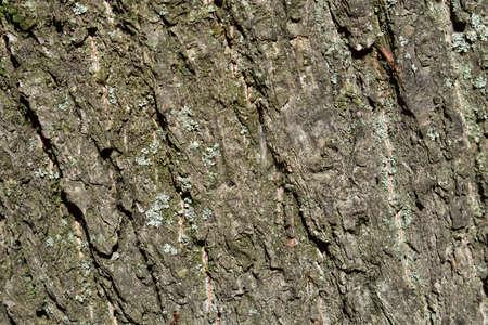 wood texture background Stock Photo