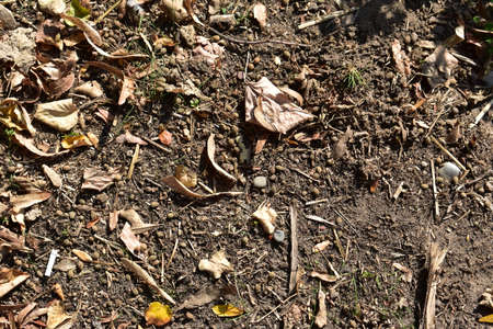 Ground with fallen leaves