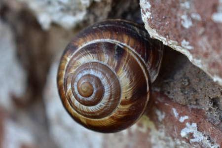 Snail on the brick wall closeup