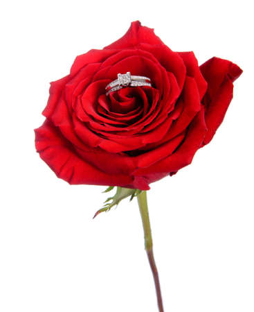 A diamond engagement ring resting in a red rose, isolated against a white background.