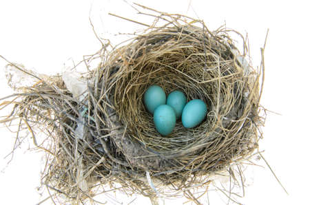 Robins nest with 4 eggs in it  Isolated on a white background