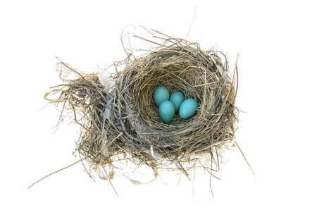 Robins nest met 4 eieren in het geïsoleerd op een witte achtergrond