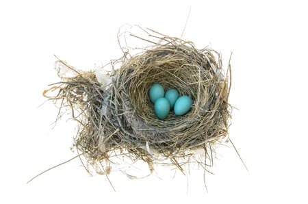 robins: Robins nest with 4 eggs in it  Isolated on a white background