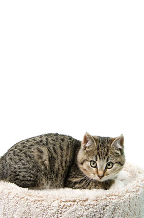 Tabby kitten lying on a cat bed, isolated on a white background. Stock Photo