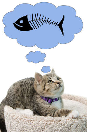 A tabby kitten thinking about some fish, isolated on a white background. Stock Photo