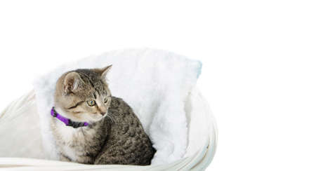 A tabby kitten sitting in a basket, isolated against a white background.