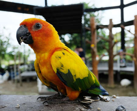 Parrot in the farm