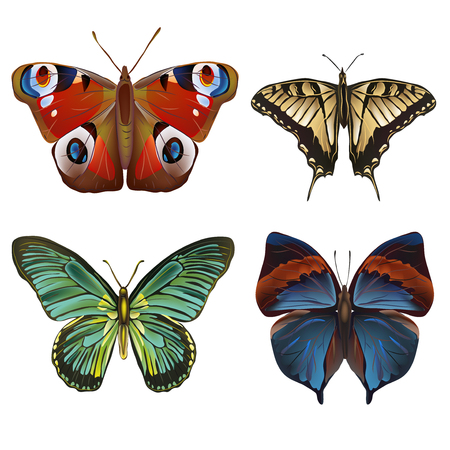 butterfly background: Vector illustration of  Collection of various kinds of butterflies, isolated on white background