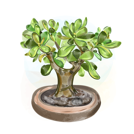 crone: Vector illustrations. Watercolor Money Tree Bonsai. Hand draw japanese tree. Illustration