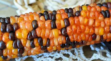 shucked: Indian Corn