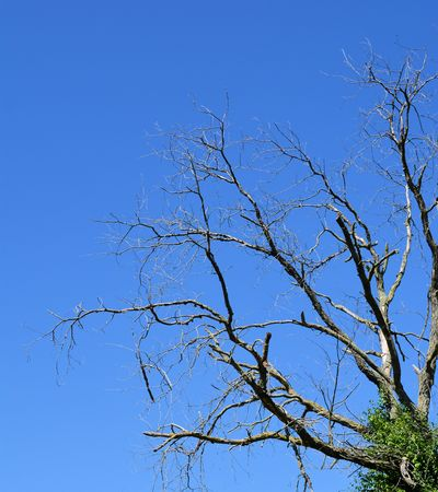 Portrait picture of bare branches against blue sky