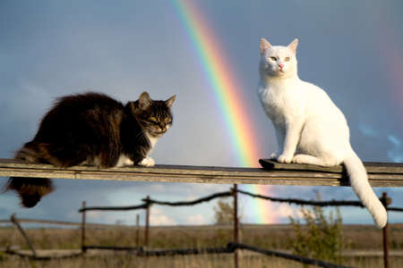 two cats sit on fence and rainbow Archivio Fotografico