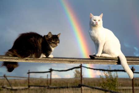 Dvě kočky sedí na plot a duha Reklamní fotografie