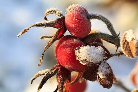 briar: frozen red briar berry