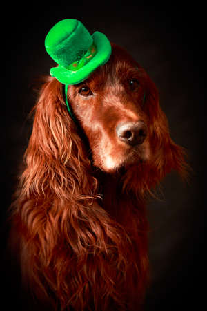 irish dog in st patrick hat photo