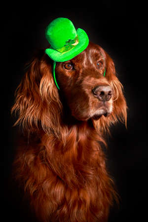 irish dog in st.patrick hat photo