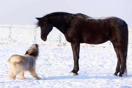 Black stallion and dog Banque d'images