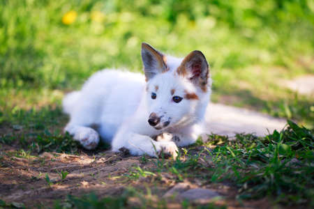 white-red fox pup Stock Photo - 29197714