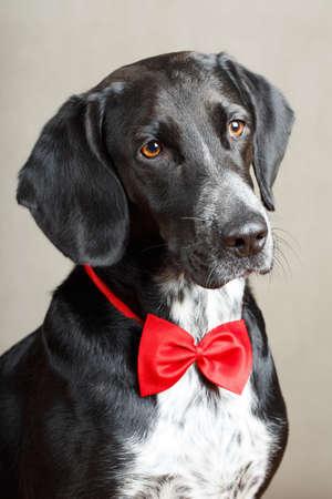 černý pes Reklamní fotografie
