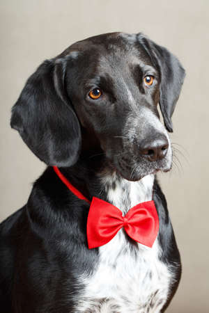 black dog Banque d'images
