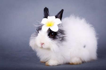 enano: conejo enano Foto de archivo