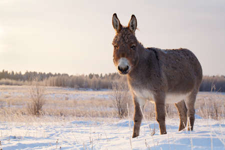 gray: gray donkey Stock Photo