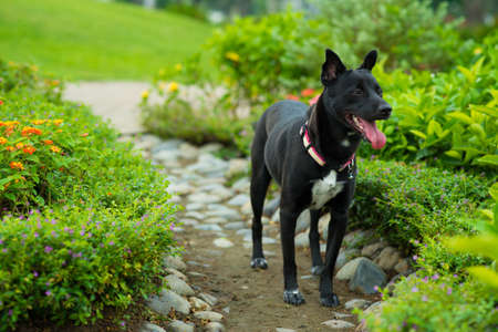 groomed: Image of a black domestic dog standing in the park