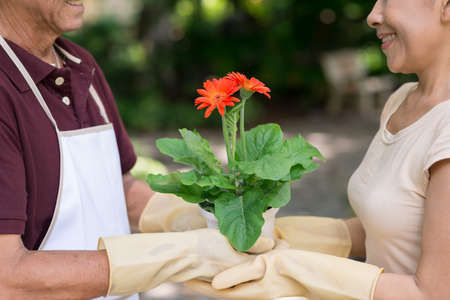 landlady: Close-up image of a senior couple holding a flowerpot with a blooming flower together