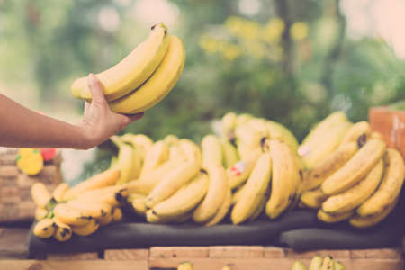 focus on foreground: Image of a human hand holding a bunch of ripe bananas on the foreground