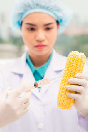 modifying: Woman scientist injecting corn cob Stock Photo