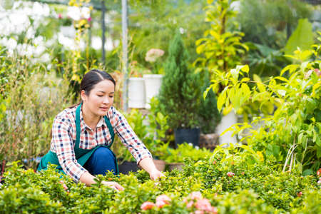 Young woman checking plants in the hothouse