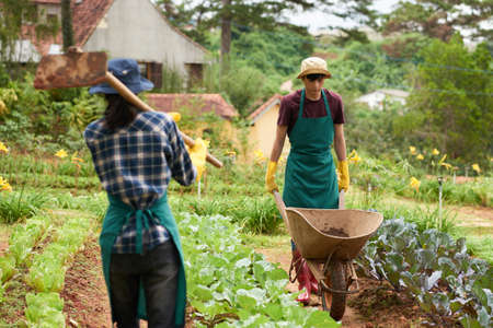 Working process at spacious vegetable garden: handsome Asian man wearing apron and gumboots driving empty wheelbarrow while unrecognizable woman walking along herb beds with hoe in hands Stock Photo