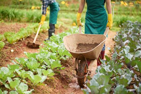 Farmer using wheelbarrow when working on plantation Stockfoto
