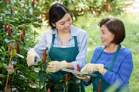 Mature female gardener teaching her young colleague how to cutting leaves, she showing instruction on tablet pc