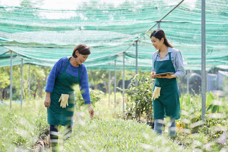 Two female farmers in aprons examining grow of plants and discussing something in greenhouse Фото со стока