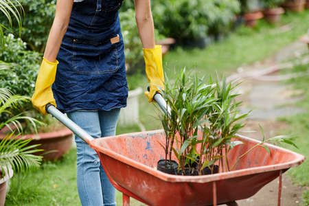 Cropped image of female gardener in apron and gloves pushing wheelbarrow with plants in it Reklamní fotografie